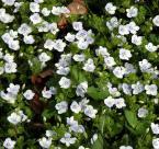 """Antoni Dziuban """"dywan"""" (2003-05-10 21:04:39) komentarzy: 32, ostatni: kwiatki są fajne - szczególnie jak sobie przypomnieć zimę :)"""