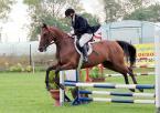 """Juras """"Skok"""" (2003-08-26 06:57:02) komentarzy: 6, ostatni: Piękne zdjęcie! Uwielbiam konie!"""
