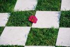 """karoten """"łazienka marzeń"""" (2003-10-03 20:29:07) komentarzy: 7, ostatni: świetny pomysł , to trawa na ścianie , czy płytki na trawie?"""