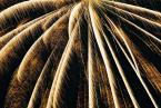 """karoten """"palma płonąca"""" (2003-10-09 22:16:55) komentarzy: 5, ostatni: palm top"""
