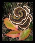 """Anka """"AnHela Grzyb Urodzinowy"""" (2003-10-22 22:33:19) komentarzy: 75, ostatni: takie zyczenia nieco złosliwe z podtekstem zgrzybiałości ... ? :-) Ładna ikebana"""