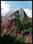 """LinKuei """"..:: Kochane Góry ::.."""" (2003-10-29 22:36:13) komentarzy: 82, ostatni: chyba musisz kupic jakis polarek na niebo:))"""