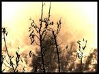 """Alghor """""""" (2003-11-02 22:26:10) komentarzy: 9, ostatni: Jak by bąba wybuchła! Dobre"""