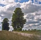 """Cezary Wojciech """"Droga do Dąbrówki 2"""" (2003-11-10 21:19:50) komentarzy: 25, ostatni: przy tym zdjęciu postanowiłąm dodać cie do ulubionych autorów,jesteś naprawde dobry,gratuluje"""