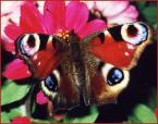 """renata p """"motylka"""" (2003-11-16 15:17:24) komentarzy: 2, ostatni: ładne"""