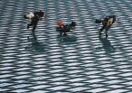 """karoten """"ewolucje matrixowe"""" (2003-11-18 23:09:44) komentarzy: 9, ostatni: patrze, patrzę i dopiero po chwili zauważyłem że coś jest nie tak z pionem ;)"""