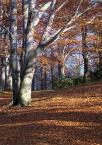 """Anka """"Kocham buki"""" (2003-11-21 19:08:26) komentarzy: 50, ostatni: Jesień jest piękna!"""