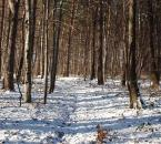 """Antoni Dziuban """"pierwszy śnieg"""" (2003-12-13 17:54:38) komentarzy: 22, ostatni: śnieg,las,ścieżka składają się na klimat tego miejsca :)"""