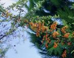 """arna """"korale"""" (2004-01-13 12:13:53) komentarzy: 8, ostatni: piękne:)"""