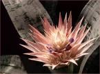 """Zazula """""""" (2004-01-19 00:28:05) komentarzy: 16, ostatni: To cos ciekawego to Echmea wstegowana. Polecam. Bardzo ladna dekoracja. Ponoc dlugo kwitnie."""