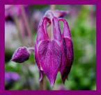 """Elżbieta """"kwiatuszek"""" (2004-01-25 21:55:55) komentarzy: 36, ostatni: te kolory są naprawdę fantastyczne :-)))"""