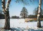 """Cezary Wojciech """""""" (2004-02-03 17:06:15) komentarzy: 27, ostatni: bardzo mi sie podoba,przyjemnie się ogląda takie zdjęcia.pzdr"""