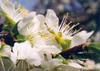 """Antoni Dziuban """"jeszcze raz wiosna"""" (2002-04-26 19:53:57) komentarzy: 16, ostatni: black velvet........keri znów tancuje sama po pokoju....radio ładnie gra.......pijana myślami i obrazami....biel spływa na mnie....czystość....anielskość...""""jesteś wszystkim przez tych kilka chwil.....""""czuje się jakbym na łące rosą..."""