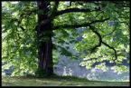"""DZID """"Słoneczny kasztanowiec"""" (2004-02-10 16:29:38) komentarzy: 19, ostatni: lubię to miejsce.. :)"""