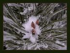 """Elżbieta """"zimowy las ...."""" (2004-02-18 12:06:01) komentarzy: 23, ostatni: Bardzo ładne (niewiem czemu środkową ramkę widać słabo).Pozdrawiam"""