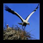 """DZID """"start"""" (2004-03-13 21:17:38) komentarzy: 46, ostatni: pRZEPIEKNIE cI POZOWALY TE NASZE BOCKI!:) fANTASTYCZNA FOTKA"""
