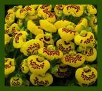 """Anka """"wiosną trzeba kupić pantofelki"""" (2004-03-21 21:22:10) komentarzy: 34, ostatni: Sliczne te kwiatuszki :-)) !"""