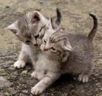 """adam wołosz """"No chodź! Tylko na jednego..."""" (2004-04-11 22:39:00) komentarzy: 40, ostatni: super kotki dwa"""