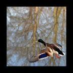 """DZID """"..."""" (2004-04-14 23:58:28) komentarzy: 32, ostatni: ♂ """"latanie na pleckach"""""""