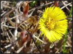 """algernon """"z kwiatka na kwiatek"""" (2004-04-17 10:09:23) komentarzy: 12, ostatni: necronomorphina - to zdjęcie jest stare jak świat i jest kiepskie fakt, z Twojego linka, fakt - niezłe"""