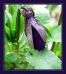 """Elżbieta """"czarna perła ...."""" (2004-04-18 20:18:14) komentarzy: 29, ostatni: mogę zatrudnić do pielenia , ... zapraszam )))"""