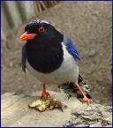 """anfo """"B.wesoły ptaszek"""" (2004-04-20 01:01:06) komentarzy: 29, ostatni: wygląda jak kos tylko pomalowany ;-)"""