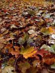"""paws """"dywan"""" (2004-04-20 22:59:27) komentarzy: 1, ostatni: Wiosna lato jesień..... przedstawiasz pory roku? Kolorki baardzo, zwłaszcza na pełnym ekranie:)"""