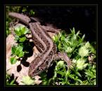 """Elżbieta """"lokatorka..."""" (2004-04-26 08:34:10) komentarzy: 31, ostatni: tez biegaja po moim ogrodzie , musze je też dopaść"""