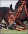 """anulla """"Dobry koń, to ułański koń... :)"""" (2004-05-06 21:02:28) komentarzy: 15, ostatni: madziunia, PYan PYoznaniak - dzieki :)"""