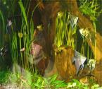 """wujek77 """"rybki"""" (2004-05-08 09:50:37) komentarzy: 9, ostatni: człowiek  ryba chyba"""