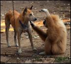 """Tramperek """"Co u Ciebie, panie sąsiedzie?"""" (2004-05-11 16:44:19) komentarzy: 77, ostatni: małpa na łańcuchu . chore to . foto bdb"""
