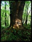 """AdamOre """"Drzewiec"""" (2004-05-12 14:34:30) komentarzy: 8, ostatni: Klimaty moje ale raczej technika nie zabardzo :/"""