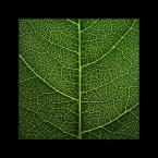 "trb ""Chlorofil"" (2004-05-23 23:43:56) komentarzy: 80, ostatni: a no dobre makro  nasycone kolorki piekne"