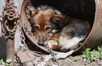 """adam wołosz """"przyjaciel człowieka"""" (2004-05-25 12:34:02) komentarzy: 13, ostatni: dawno nie widziałam czegoś tak smutnego... A te smutne psie oczy jeszcze mówią """"przepraszam, że żyję""""... Człowiek to paskudne zwierzę..."""