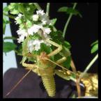 """algernon """"straszyk na bazylii"""" (2004-06-02 16:14:18) komentarzy: 2, ostatni: szkoda tej bieli - bo naprawdę świetne :P"""