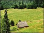 "arna ""leśne polany"" (2004-06-06 12:15:49) komentarzy: 11, ostatni: ładne"
