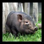 """DZID """"Kluska"""" (2004-06-09 22:24:08) komentarzy: 103, ostatni: normalnie świnia."""