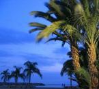 """borQT """"... palmy ..."""" (2004-06-11 09:12:16) komentarzy: 8, ostatni: Az mnie skreca zeby isc zrobic zdjecia. Mam mase pomyslow, ale sesja jest do konca miesiaca :(((("""