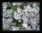 """Elżbieta """"czarodziejski ogród......."""" (2004-06-16 19:01:30) komentarzy: 36, ostatni: lubie takie"""