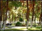 """arna """"park"""" (2004-06-17 11:45:36) komentarzy: 11, ostatni: malownicze"""