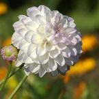 """Antoni Dziuban """"xxx"""" (2002-08-03 21:00:25) komentarzy: 20, ostatni: przecietny kwiatek jakich wiele."""