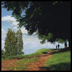 """AdamOre """"Popołudniowy spacer"""" (2004-07-04 14:09:29) komentarzy: 25, ostatni: eh"""