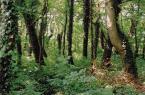 """Zbigniew Pluta """"***"""" (2002-08-11 22:13:01) komentarzy: 28, ostatni: Śliczne, leśna dżungla ;):)"""