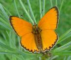 """1852m """"rusałka Ratownik"""" (2004-07-19 16:32:56) komentarzy: 10, ostatni: jest i motylek :P"""
