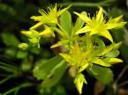"""jslawin """"Trzy korony"""" (2004-07-19 17:55:14) komentarzy: 31, ostatni: sliczny kwiat ,urocza jakosc i kolorystyka :-)))"""