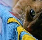 """Marysia """"rudy na wakacjach"""" (2002-08-22 22:53:27) komentarzy: 22, ostatni: fajne koto-foto"""