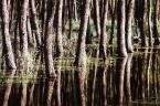 """Adam Skotarczak """"las w wodzie"""" (2001-05-17 20:25:48) komentarzy: 10, ostatni: Fajne, ale trochę za mało ostre."""