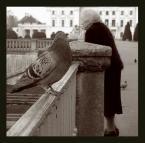 """rege """"babcia"""" (2004-08-30 05:56:52) komentarzy: 25, ostatni: Tego gołębia już znam. Ale zupełnie inny niż mój, bo babciny jeszcze. Pozdrawiam."""