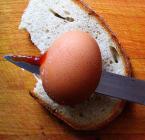 """borQT """"wysoki sadzie - musiałem to zrobić - jadło mój chlebek..."""" (2004-09-05 16:41:42) komentarzy: 19, ostatni: nie wiem czy obróbka jakas była :) ale mniej wagi wiążę z wykonaniem - na razie skupiam się na pomysłach - lepsza realizacja poczeka :)"""