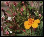 """anulla """"... kolory kończącego się lata ..."""" (2004-09-10 22:51:53) komentarzy: 9, ostatni: Kalinka, wawrzynka - dziękuję :)"""